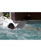 swimfin płetwa do pływania czarna